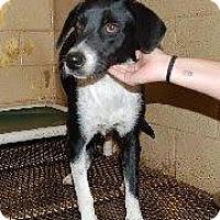 Adopt A Pet :: Bella - Laingsburg, MI