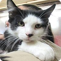 Adopt A Pet :: Westin - Reeds Spring, MO