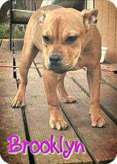 Boxer Dog for adoption in Killeen, Texas - Brooklyn