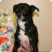 Adopt A Pet :: Sally - Wildomar, CA