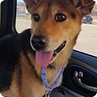 Adopt A Pet :: Roscoe - Bradenton, FL