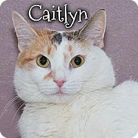 Adopt A Pet :: Caitlyn - River Edge, NJ