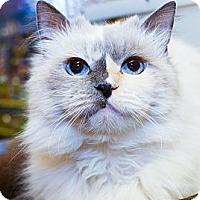 Adopt A Pet :: Cinnamon - Irvine, CA