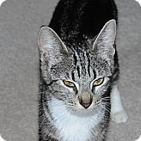 Adopt A Pet :: Chelsea Adopted - Nine Mile Falls, WA