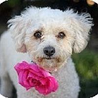 Adopt A Pet :: Bacardi - Atascadero, CA