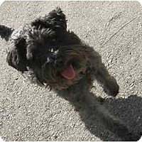Adopt A Pet :: Pinkie - Meridian, ID
