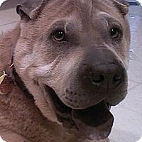 Adopt A Pet :: Tonic - Barnegat Light, NJ