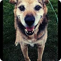 Adopt A Pet :: Kota - Kirkland, WA