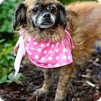Adopt A Pet :: Ellie - San Pedro, CA