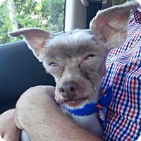Adopt A Pet :: Cocoa - Gainesville, FL