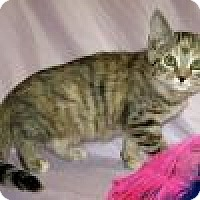 Adopt A Pet :: Phee Phee - Powell, OH