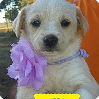 Adopt A Pet :: Abby, Sadie, and Jessi - Brattleboro, VT