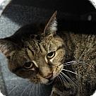 Adopt A Pet :: Tori* - Henderson, NC