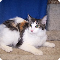 Adopt A Pet :: K-Apple2-Mollie - Colorado Springs, CO