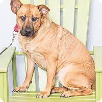 Adopt A Pet :: Sky - Jupiter, FL