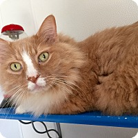 Adopt A Pet :: Simba - Hanna City, IL