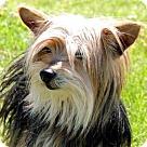Adopt A Pet :: STEWART