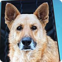Adopt A Pet :: SIMBA VON JASMIN - Los Angeles, CA