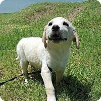 Adopt A Pet :: Piper - Aurora, CO