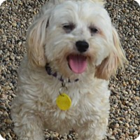 Adopt A Pet :: Mandy - Prole, IA