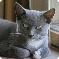 Adopt A Pet :: Ryder - North Fort Myers, FL