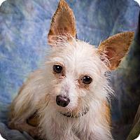 Adopt A Pet :: KAI - Anna, IL