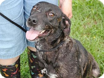 Mountain Cur Mix Dog for adoption in Anniston, Alabama - Abby