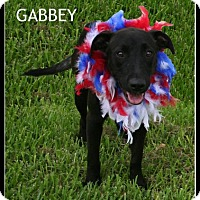 Adopt A Pet :: Gabby - Houston, TX