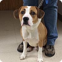 Adopt A Pet :: Hazen - Greensburg, PA