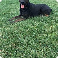 Adopt A Pet :: Stacy - Orange County, CA