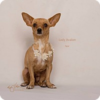 Adopt A Pet :: Lady Avalon - Riverside, CA