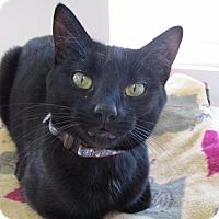 Adopt A Pet :: Stella - Cumberland, ME