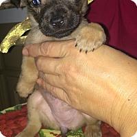 Adopt A Pet :: Suzette - Boerne, TX