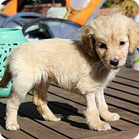 Adopt A Pet :: Jazzi - Los Angeles, CA