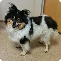 Adopt A Pet :: Sasha - Harrisburg, PA