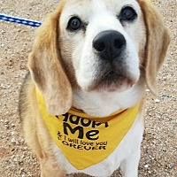 Adopt A Pet :: Rocky Tivo-See him on Dogingtonpost.com - Apple Valley, CA