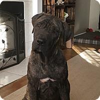 Adopt A Pet :: Chase - Norwood, GA