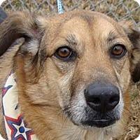 Adopt A Pet :: Koda - Aurora, IL