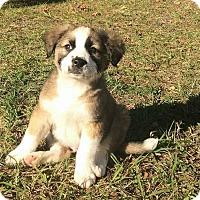 Adopt A Pet :: Hipster - Gainesville, FL