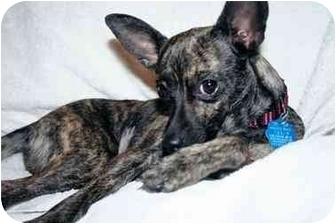 Greyhound Dog Adoption Ohio