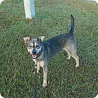 Adopt A Pet :: BUFFY - Wilmington, NC