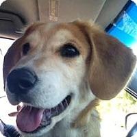 Adopt A Pet :: Winslow - Phoenix, AZ