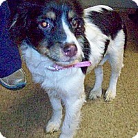 Adopt A Pet :: BELLA - Glastonbury, CT