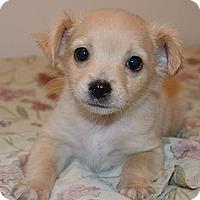 Adopt A Pet :: Mutt - LaGrange, OH