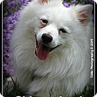 Adopt A Pet :: Nova - Elmhurst, IL