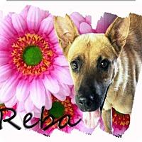 Adopt A Pet :: REBA - Higley, AZ