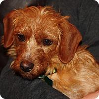Adopt A Pet :: Aaliyah - Decatur, GA