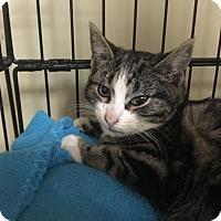 Adopt A Pet :: Cress - Island Park, NY