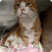 Adopt A Pet :: Guy - Windsor, VA