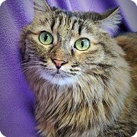 Adopt A Pet :: Josey - Colorado Springs, CO